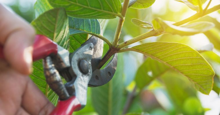 Wisconsin's Ultimate Pruning Guide for Trees, Shrubs and Perennials